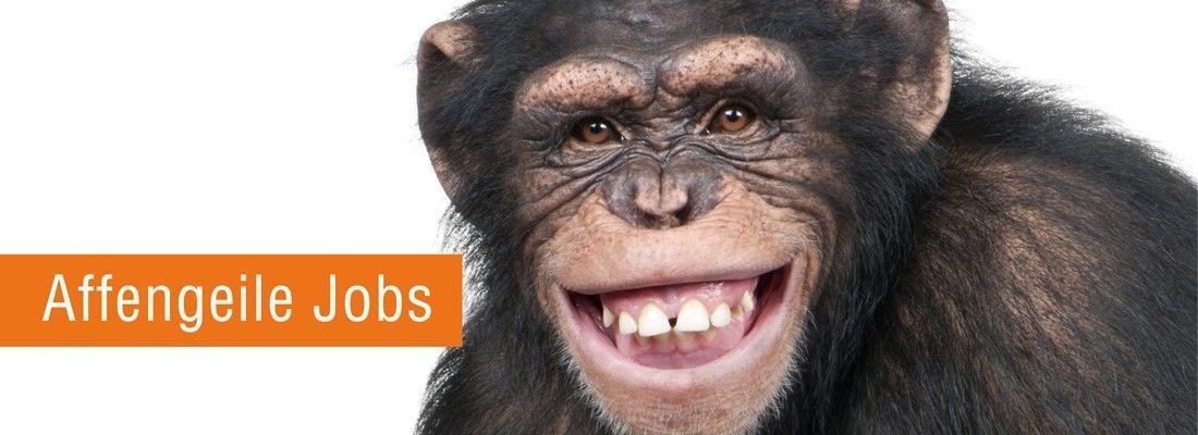 Affengeile Jobs