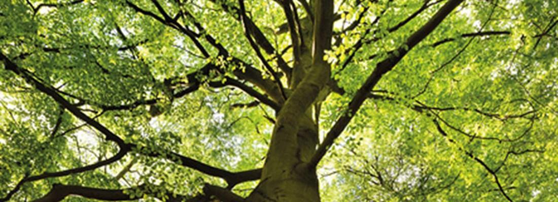 Baum des Franchising