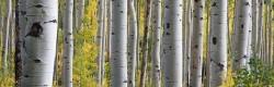 Birkenwald genießt Urheberrechtsschutz