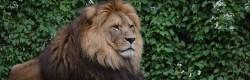 So viel hat jeder Löwe bei DHDL 2017 investiert!