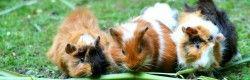 Franchise-Partner  Zoo & Co. übernimmt dritten Standort